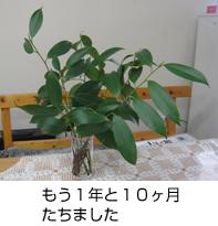 image_02 発行第30号