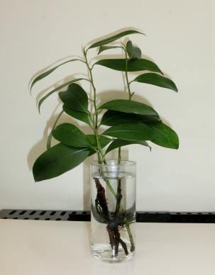 平成25年 第37号 植物